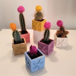 Mini Pot cubique étoile