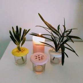 Lote 3 Mini floreros rectos con tapa Botonflor soporte de flores