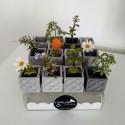 12 Mini Pot Cubiques Panots, Pavés rose de Barcelone