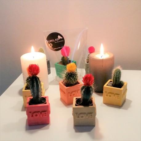 "Mini Cubic pot ""LOVE - HAPPY"""