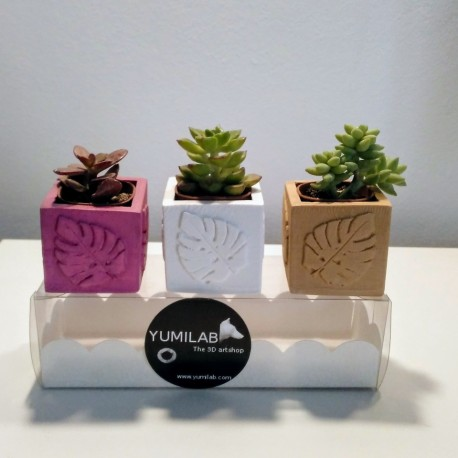 3 Mini monstera leaves cubic pots