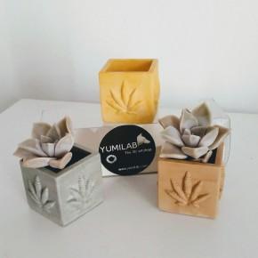 3 mini pots cubiques feuilles de chanvre