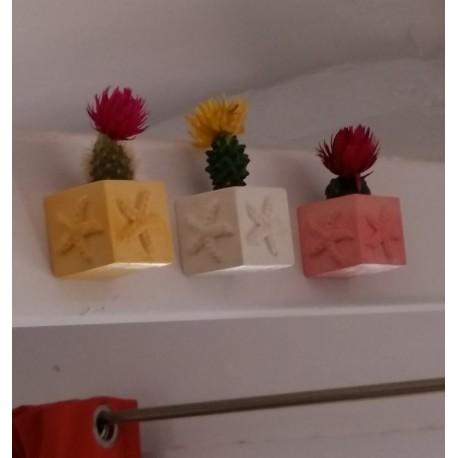 3 Mini Macetas cúbicas magnéticas estrellas de mar, mini floreros