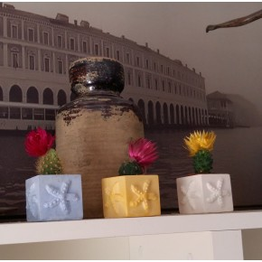 3 mini pots cubiques magnétiques étoiles de mer, mini vases