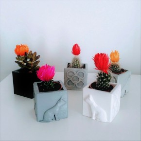 Mini cubic cats and panots pot