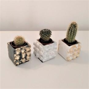 Mini magnetic shells pot